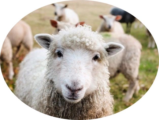 takarmány juhoknak, kecskéknek