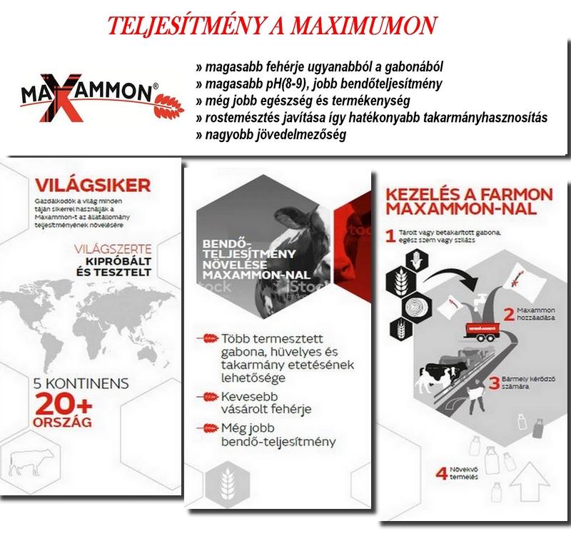 MAXAMMON