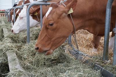 tejgazdaság